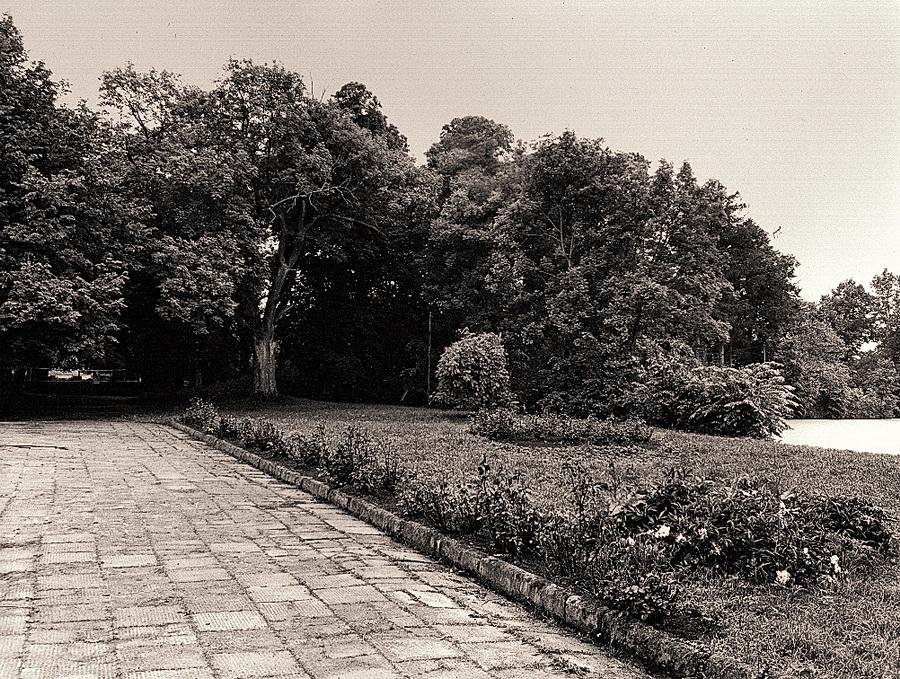 ogrod-dworski-w-dolubowie-widok-z-terenu-miedzy-dworem-a-stawem-dawnym-parterem-wodnym-na-drzewostan-parku-stan-z-1988-r