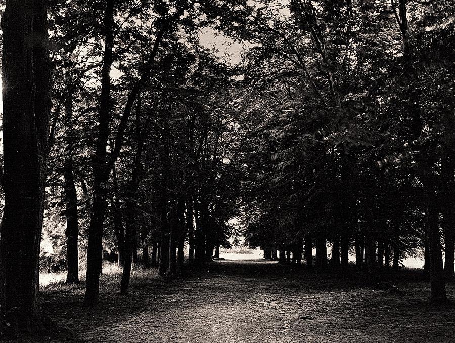 ogrod-dworski-w-dolubowie-wnetrze-czterorzedowej-alei-kasztanowcowo-grabowej-stan-z-1988-r