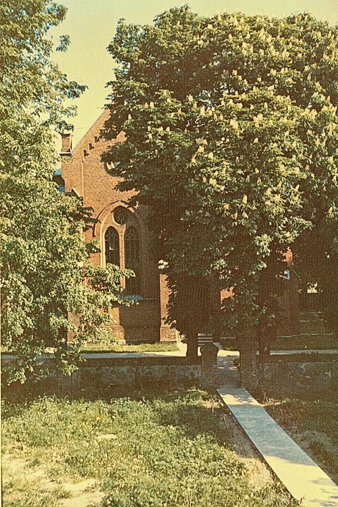 Kasztany przed kościołem w Dołubowie